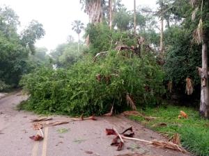 storm damage-1-blog